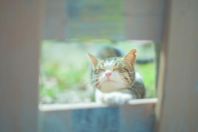 猫 可愛い あるある