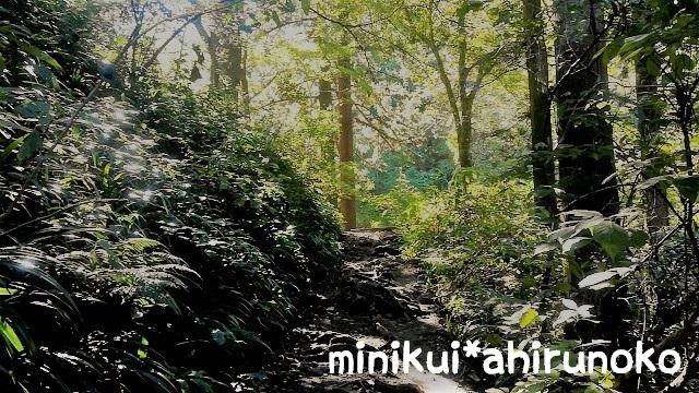 高尾山 6号路 きつい