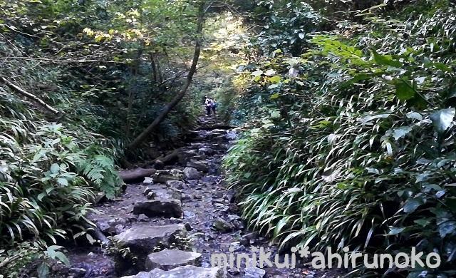 高尾山 6号路 飛び石